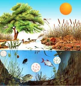 external image ecosistema1.jpg