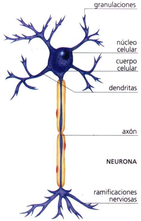 neurona2