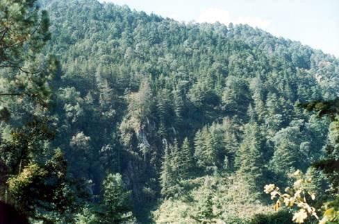 bosque_clima_templado