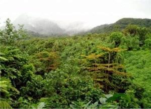 bosque_lluvioso